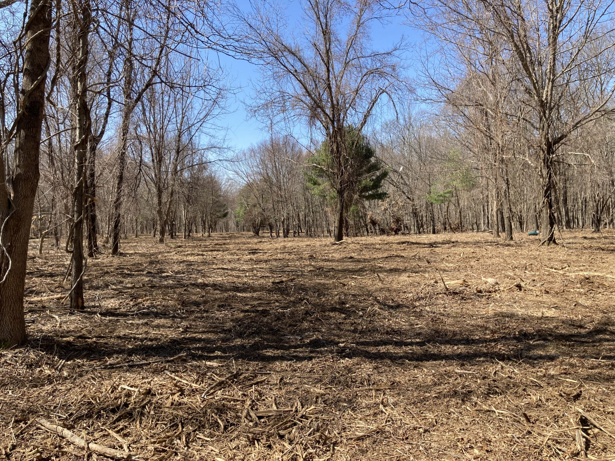 Forestry mulching page photo separate image from banner 2048x1536